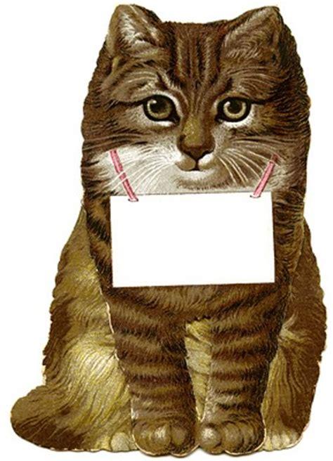 beautiful vintage kitten  cat pictures
