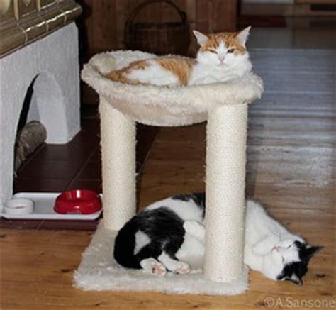 Wie Organisiere Ich Meinen Haushalt Besser by Wie Ist Es Mit Baldrian Und Den Katzen