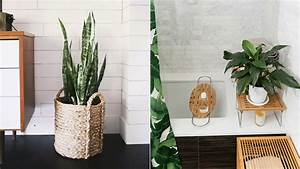 The 10 Best Bathroom Plants to Thrive in High-Humidity Areas