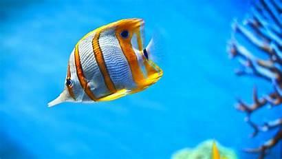 Fish Ocean Fishes Underwater Sea Nature Sealife