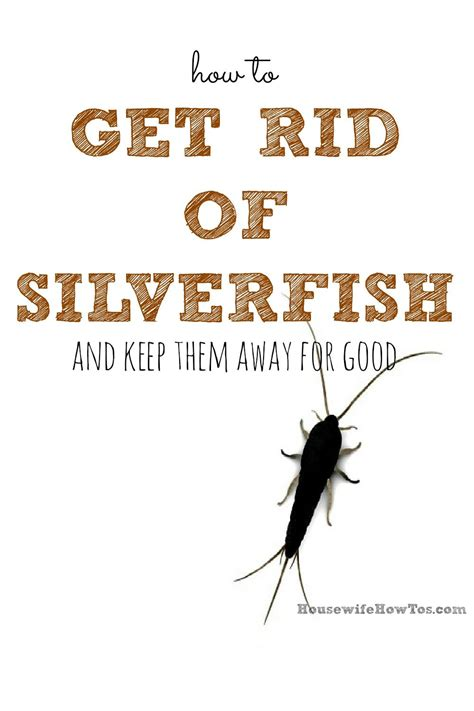 How To Get Rid Of Fishmoths In Cupboards by Getting Rid Of Silverfish By Can Be Tricky Since They