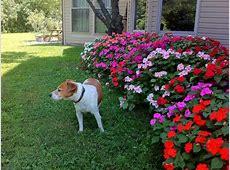 Primitive Flower Garden Ideas The Best Flowers Picking