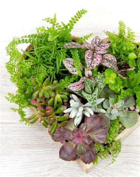 plante succulente d interieur atlub
