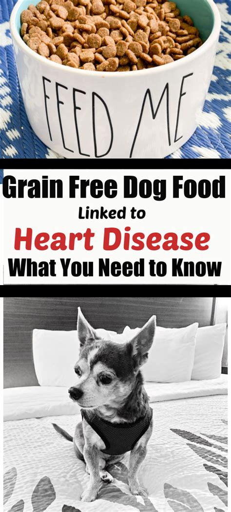 heart disease  dogs fda reports grain  diets linked