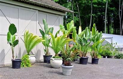 Tropical Plants Weather Farm Warm Every Around