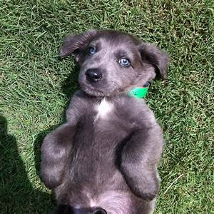 17 Best images about doggies i want on Pinterest ...