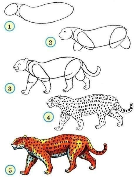draw  leopard drawing diy zoo drawing