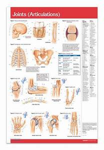 Joints Articulations - Hands