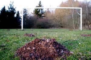 Halten Maulwürfe Winterschlaf : maulwurf maulwurfsh gel 17 news von b rgerreportern zum ~ Lizthompson.info Haus und Dekorationen