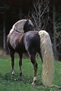 Beautiful White Horse with Mane