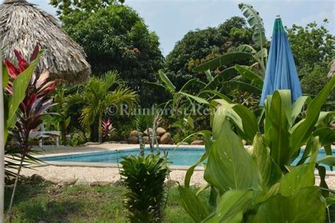 plants for pool area belize rainforest retreat for sale