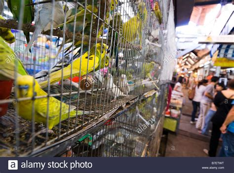 caged birds for sale on a pet shop stall at chatuchak