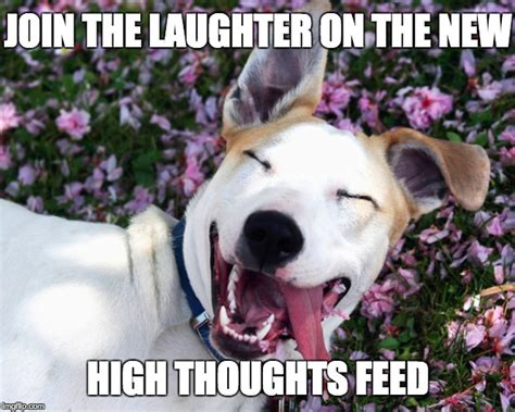 Stoned Dogs Meme - laughing stoned puppy imgflip