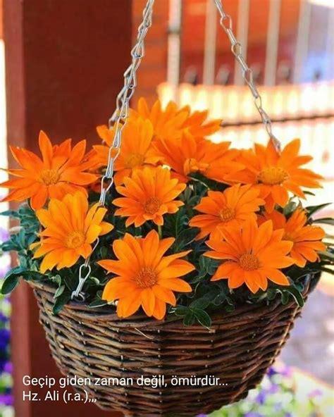 Este posibil ca imaginea să conţină: floare şi plantă | Indoor flowers, Plants, Planting flowers