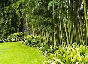 Bambou Pour Haie Brise Vue : haie de jardin d couvrez les secrets des plantes brise vue ~ Premium-room.com Idées de Décoration