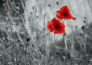 50 Mind-blowing Examples Of Selective Color Photography » Blog » SchemeColor.com