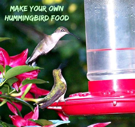 diy hummingbird food make your own hummingbird food recipe diy recipe laura s little house tips
