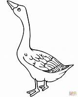 Coloring Goose Outline Bird Pages Loca Template Cuckoo sketch template