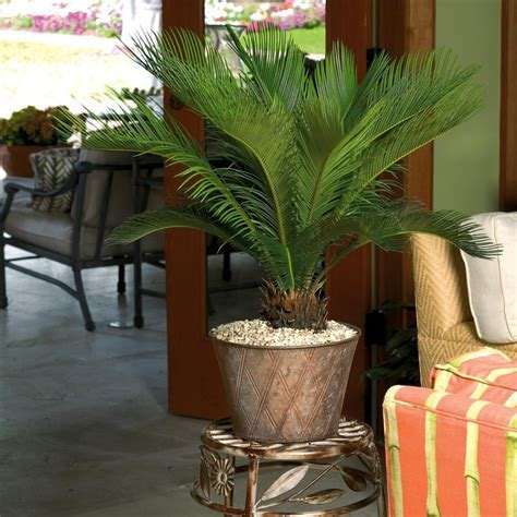 Shop Plants of Steel Sago Palm (L2969HP) at Lowes.com