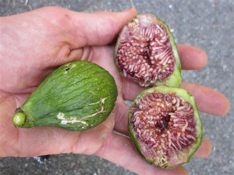 types of figs 6 types of figs to try right now food republic