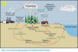 Human Impact On Nitrogen Cycle
