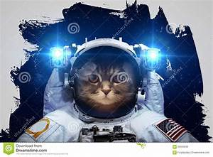 Beautiful Cat In Outer Space Editorial Stock Image - Image ...