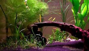 Aquarium Gestaltung Bilder : aquarium zu weihnachten geschenkt bekommen was tun ~ Lizthompson.info Haus und Dekorationen