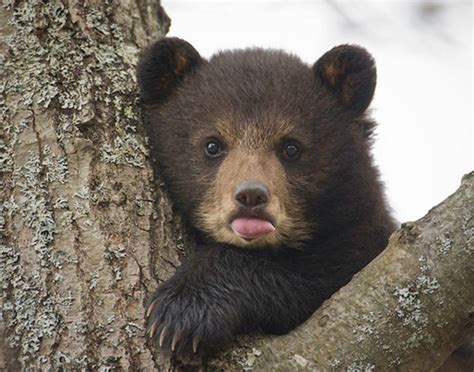Extra Cute Baby Bear !!!!!!!!!!!