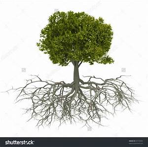 Tree With Roots Drawing - Drawing Art Library