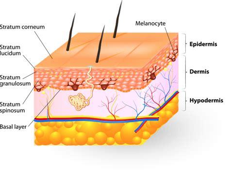 Understanding Your Skin
