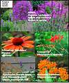 Defining Your Home, Garden and Travel: Shuffling Plants purple and orange flower garden
