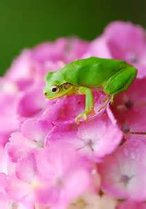 Green Frog On Flowers