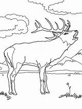 Elk Coloring Hunting Pages Rifle Sniper Drawing Antlers Bull Sketch Its Colouring Getdrawings Template Guns sketch template