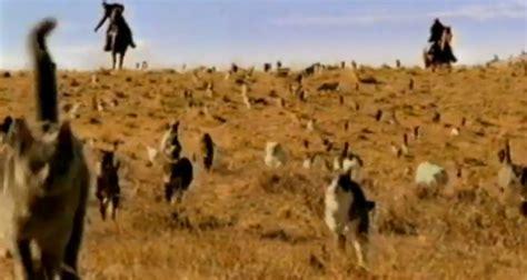 cat herder cowboys herding cats