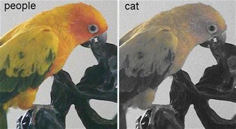 do cats see in color cats vision what does your see