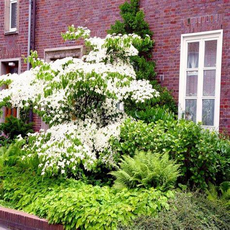 Pflanzen Nordseite Haus by Vorgarten Nordseite