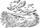 Coloring Flock Crows Pages Supercoloring Pasari Calatoare Cu Desene sketch template
