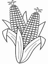 Corn Coloring Pages Cob Stalk Drawing Fall Indian Stalks Line Harvest Easy Ear Colouring Harvesting Outline Preschool Coloringsun Ears Printable sketch template