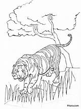 Tiger Coloring Pages Animals Wild Pitara Craft sketch template