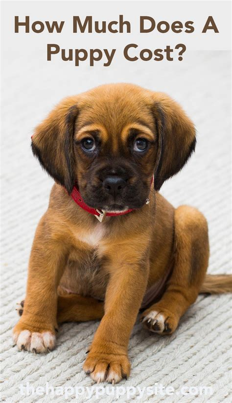How Much Does A Dog Cost? By The Happy Puppy Site