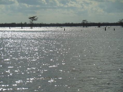 Boat Rental Atchafalaya Basin by Interstate Highway 10 East And West Lanes Picture Of
