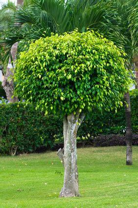 planter un arbre en pot trucs et astuces pour planter un arbre bricotravaux fr