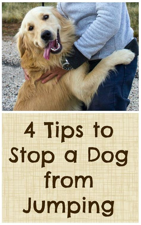 How To Stop My Puppy Jumping On The Sofa by 4 Tips To Stop A From Jumping Tips Tips And