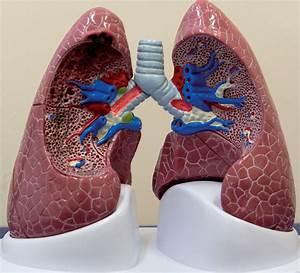 Amoebe leverabces: Pus in lever door parasiet met buikpijn