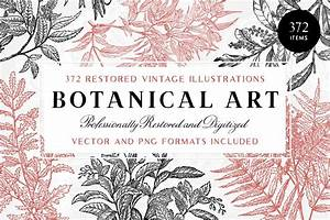 372 Vintage Botanical Illustrations - Tom Chalky