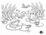Pond Coloring Adult Printables Frog Template Parks Recreation Sketch sketch template