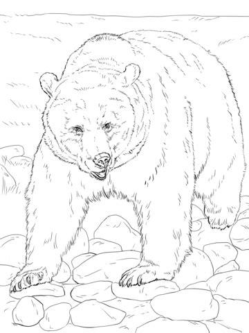 disegno  orso bruno  quattro zampe da colorare