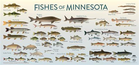 meet minnesotas fish explore minnesota