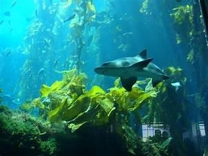 A Kelp Forest - sealaura