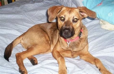Black Cur Shed by 100 Black Cur Shed A Lot Meet Winnie A